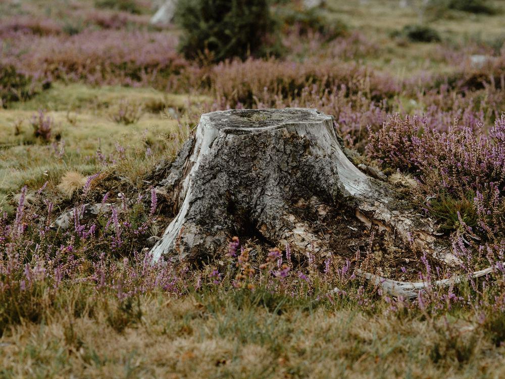 Naturtomten, en meditativ lösning för den bekväme